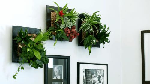plantes stabilisées utilisées pour mur végétal